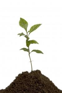 le marketing relationnel en image végétale