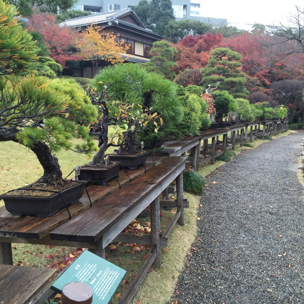 escapade à Tokyo jour 1 les Bonzaïs
